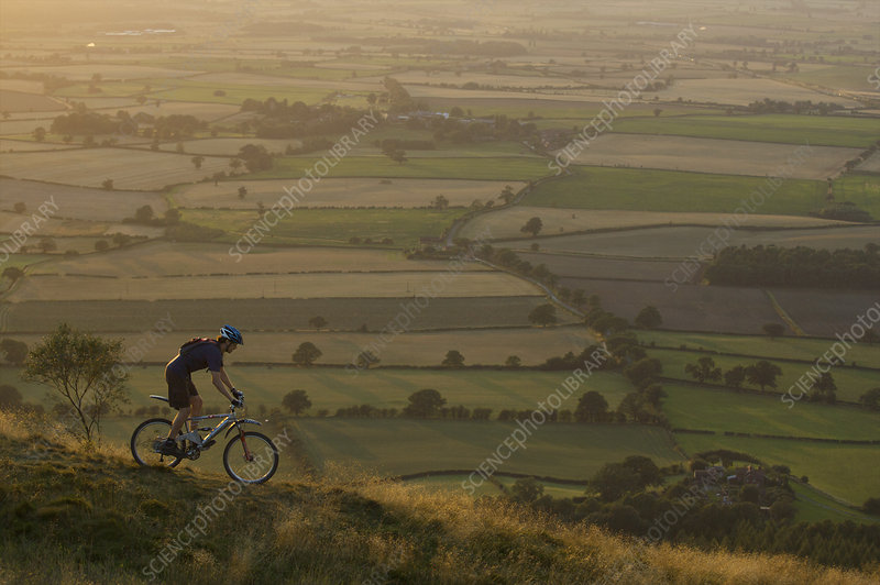 Mountain biker riding down a hill