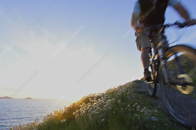 Mountain biker on a coastal track