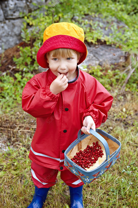 Toddler eating wild strawberries