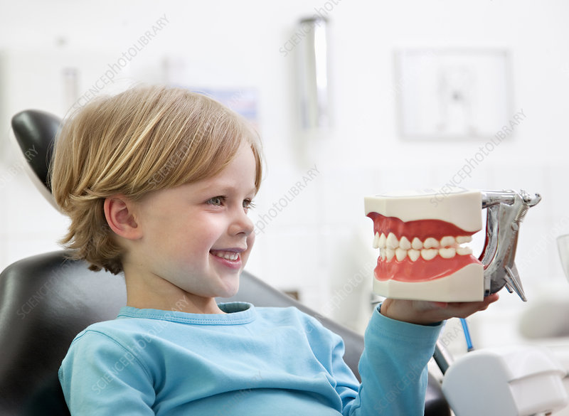 Dental patient with teeth model