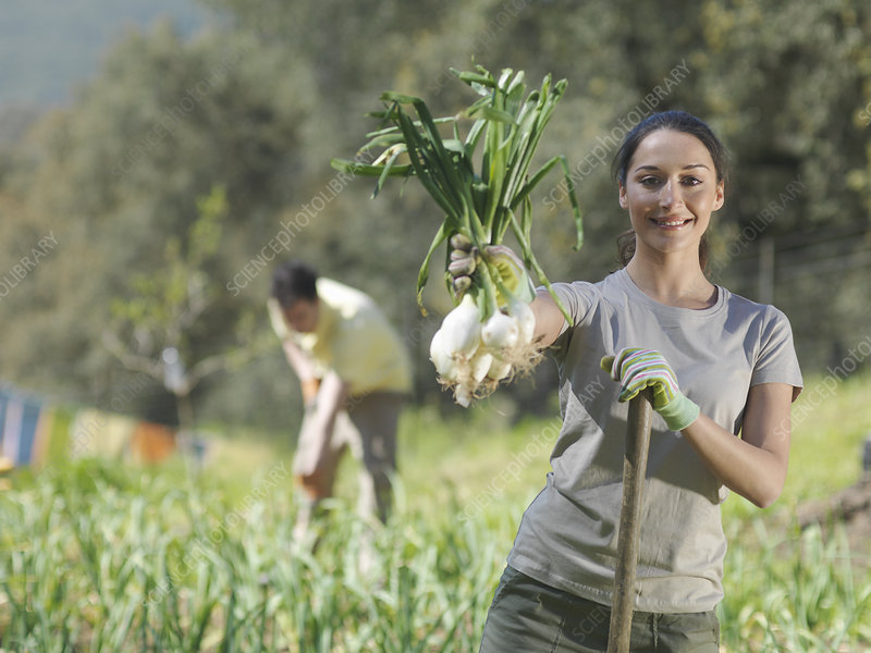 Woman showing freshly picked onions