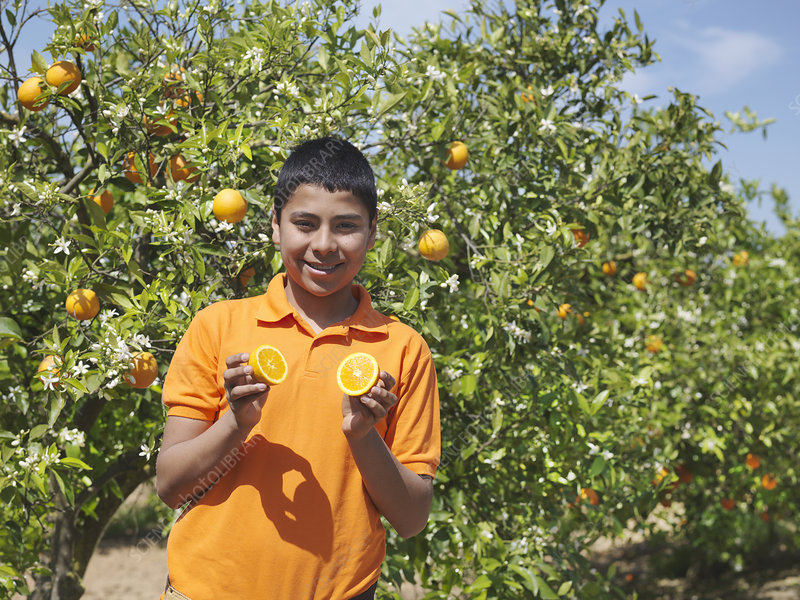 Boy in orange grove holding a cut orange