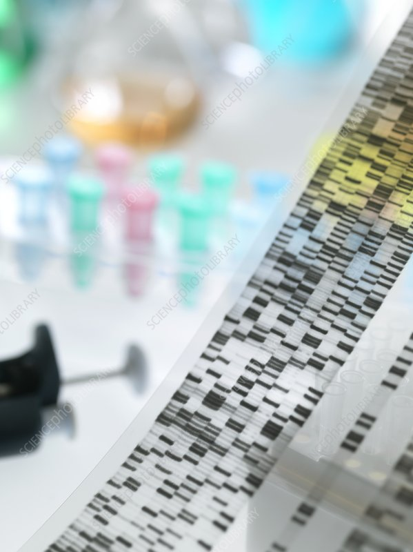 genetic research paper Genetic engineering research papers show that cloning through genetic engineering has taken place for many years genetic engineering research papers can explicate the scientific, ethical or biological aspects of genetically modifying crops and food, humans and/or other animals.
