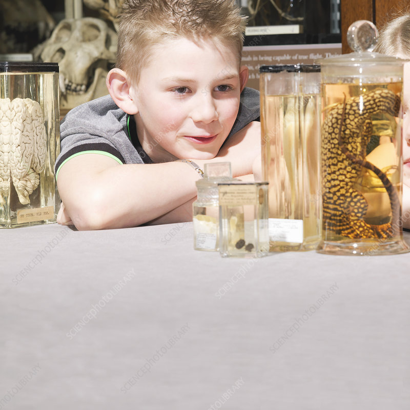 Boy looking at animals in jars