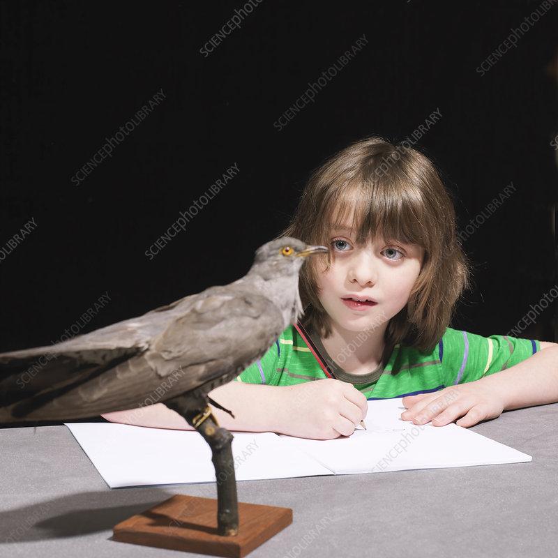 Boy drawing a bird