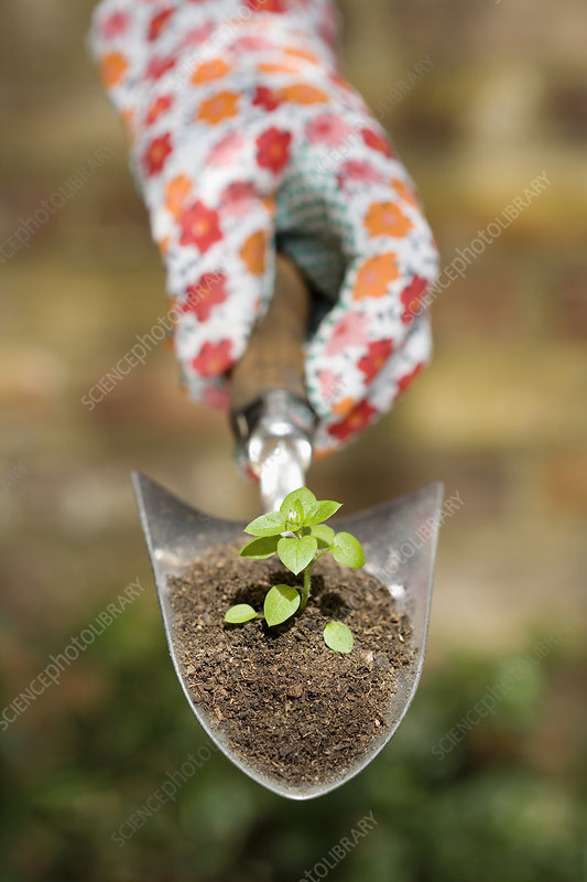 Hand holding plant on garden trowel stock image f004 for Big hands for gardening