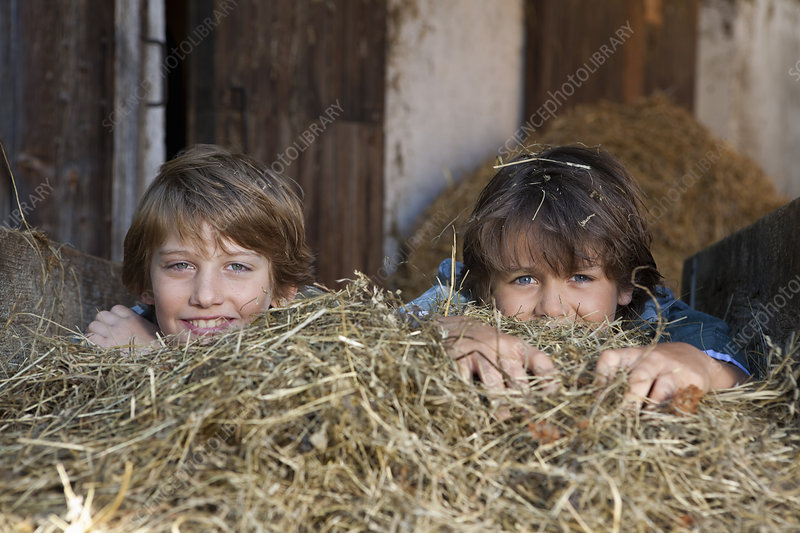 Two boys hiding in hay, happy