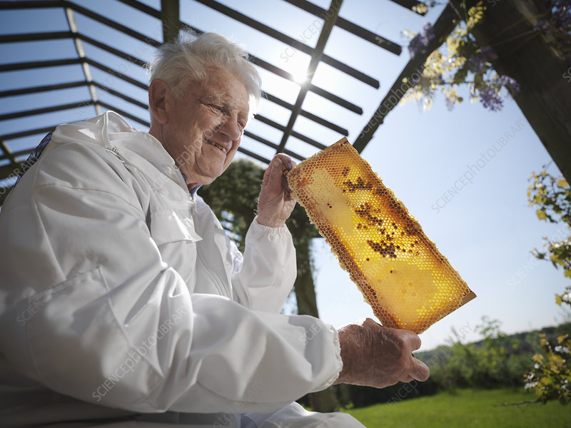 Beekeeper with honey comb