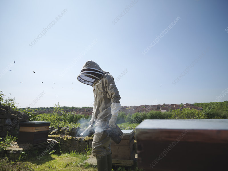 Beekeeper with smoker and hives