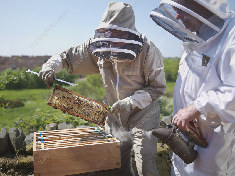 Beekeepers with honey comb and smoker