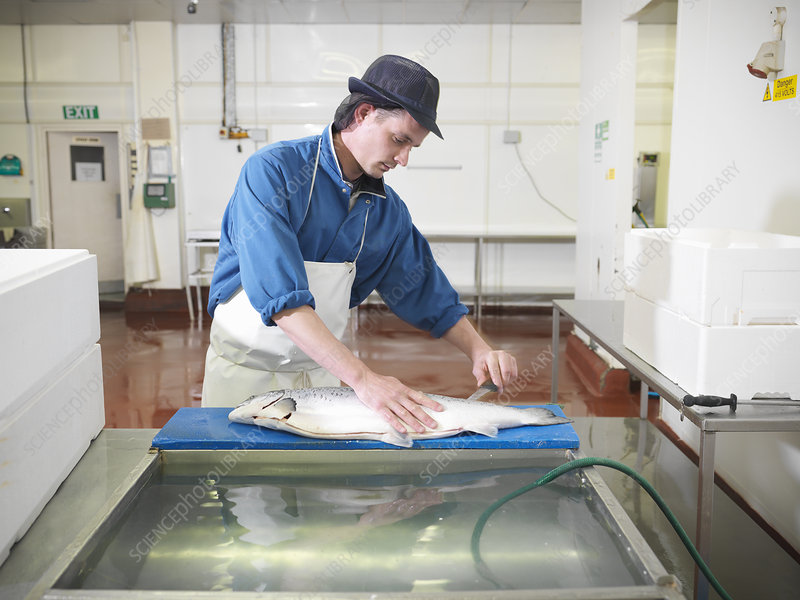 Worker filleting salmon in plant