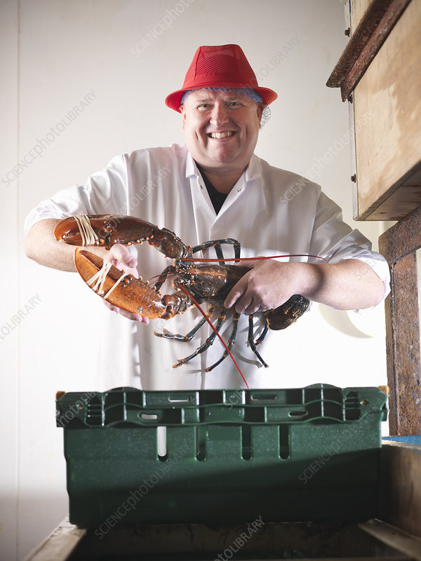 Worker holding lobster in plant