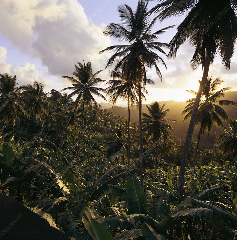 Palm trees in rural landscape