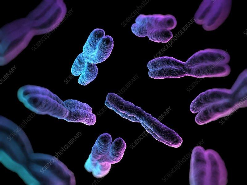 Chromosomes, artwork