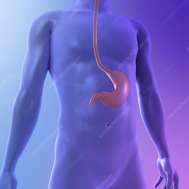 Healthy stomach, artwork