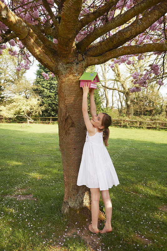 Girl hanging birdhouse in tree
