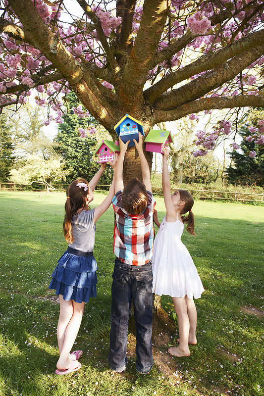 Children hanging birdhouses in tree