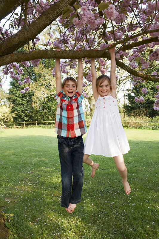 Children swinging from tree in backyard