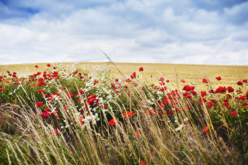 Field of flowers against blue sky
