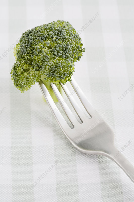 Close up of broccoli on fork