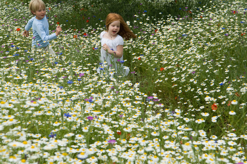 Children running in field of flowers
