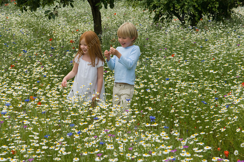 Children walking in field of flowers
