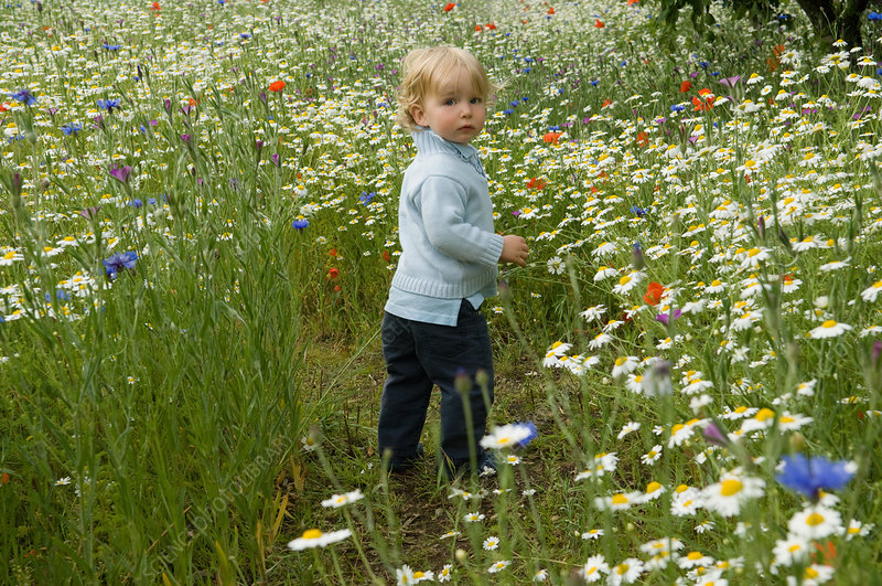 Baby walking in field of flowers