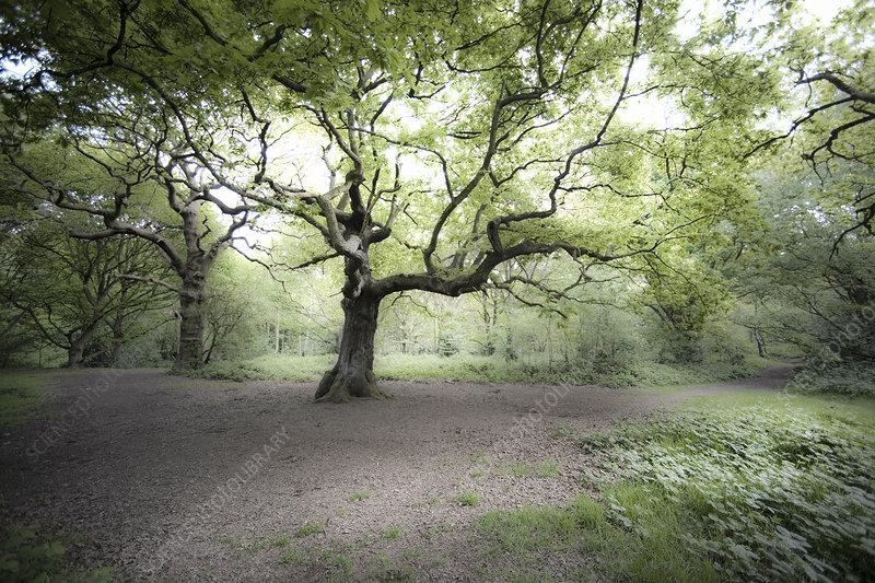 Tree in misty field