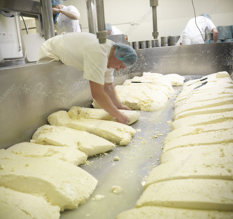 Worker making cheese in factory