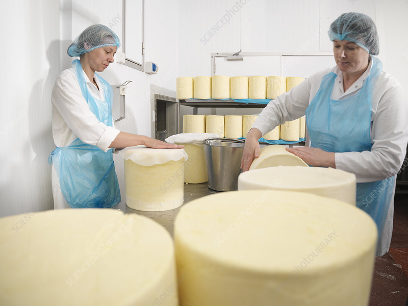 Workers wrapping cheese in factory