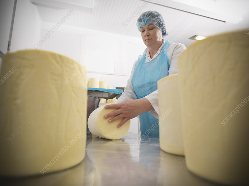 Worker wrapping cheese in factory