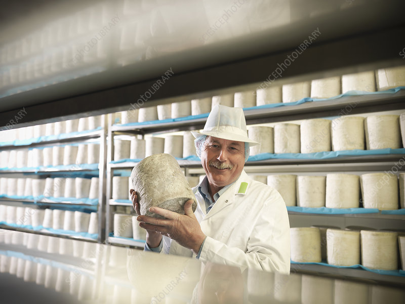 Worker holding blue cheese in factory