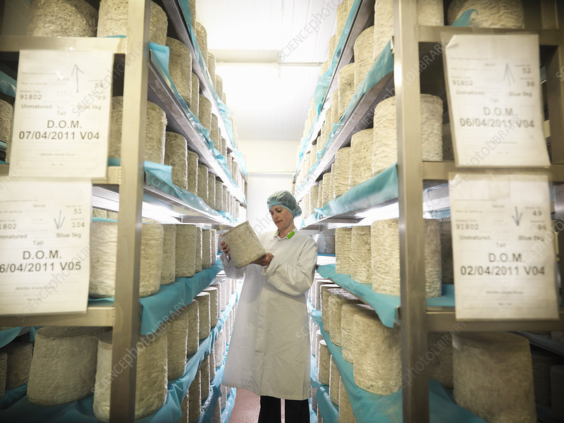 Worker checking blue cheese in factory