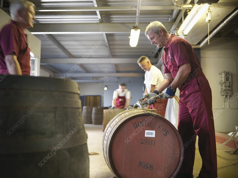 Worker with whisky barrel in distillery