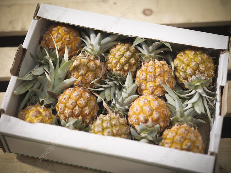 Close up of pineapples in box