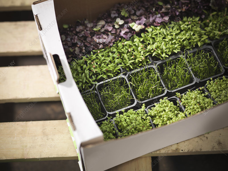 Close up of box of potted herbs