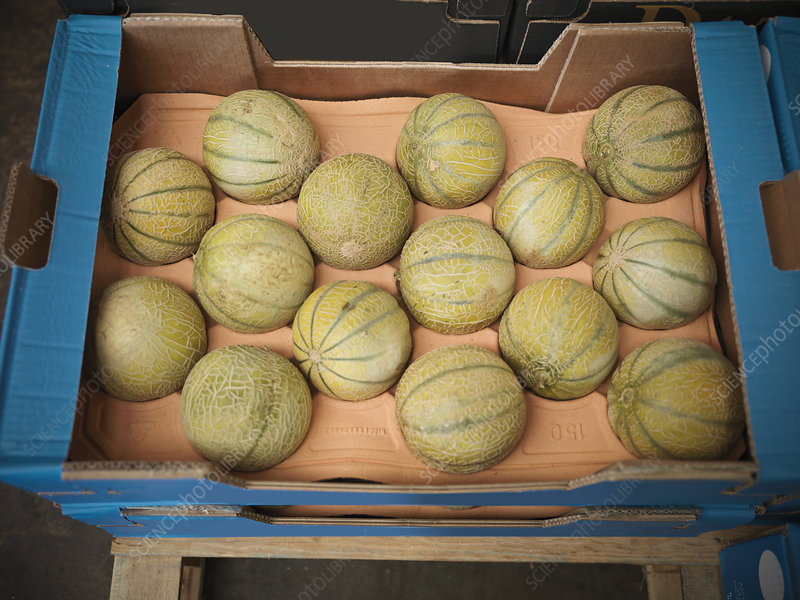 Close up of box of melons
