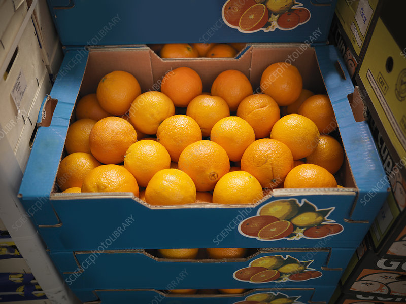 Close up of boxes of oranges