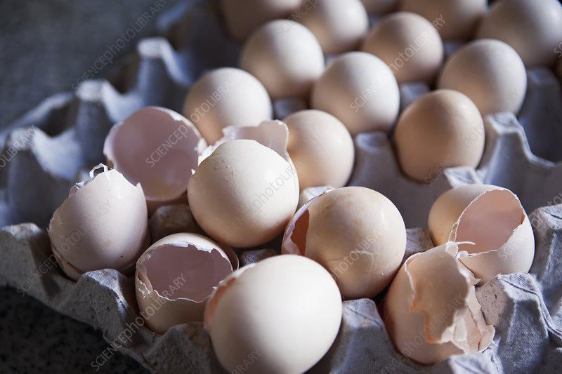 Close up of eggshells in carton