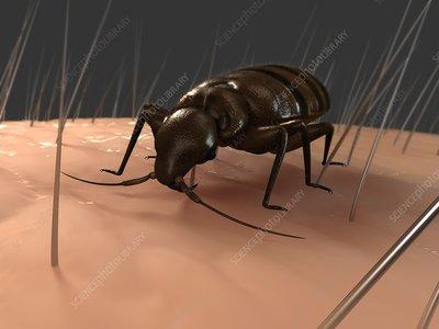 Bedbug, artwork