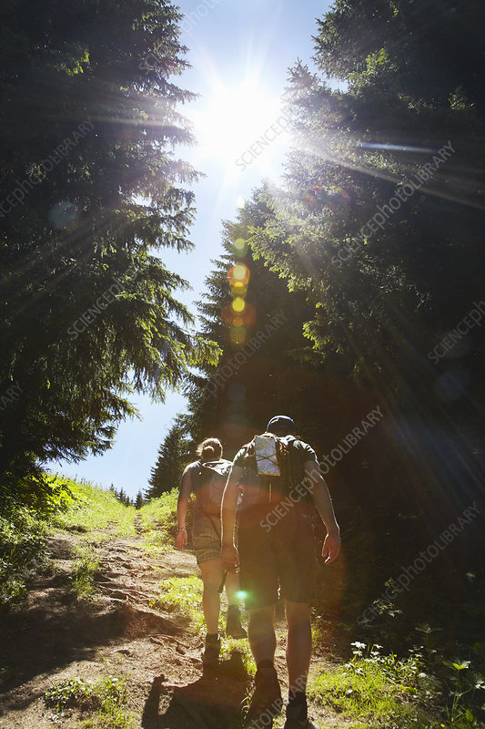 Hikers walking uphill in forest