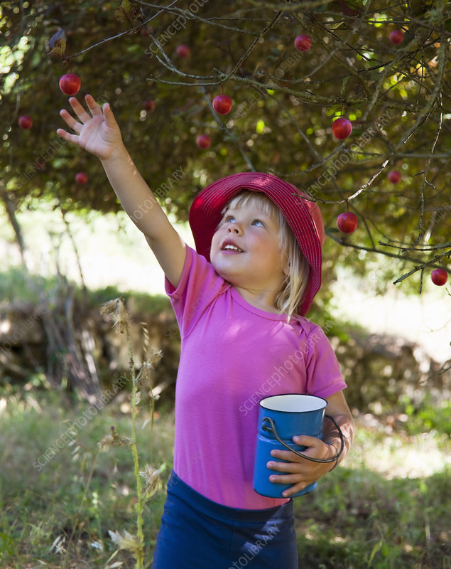 Girl picking wild plums outdoors