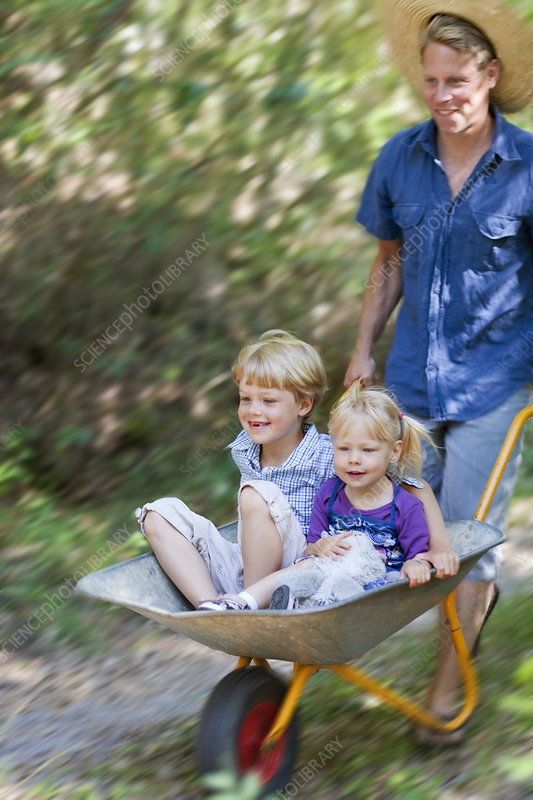 Father pushing children in wheelbarrow