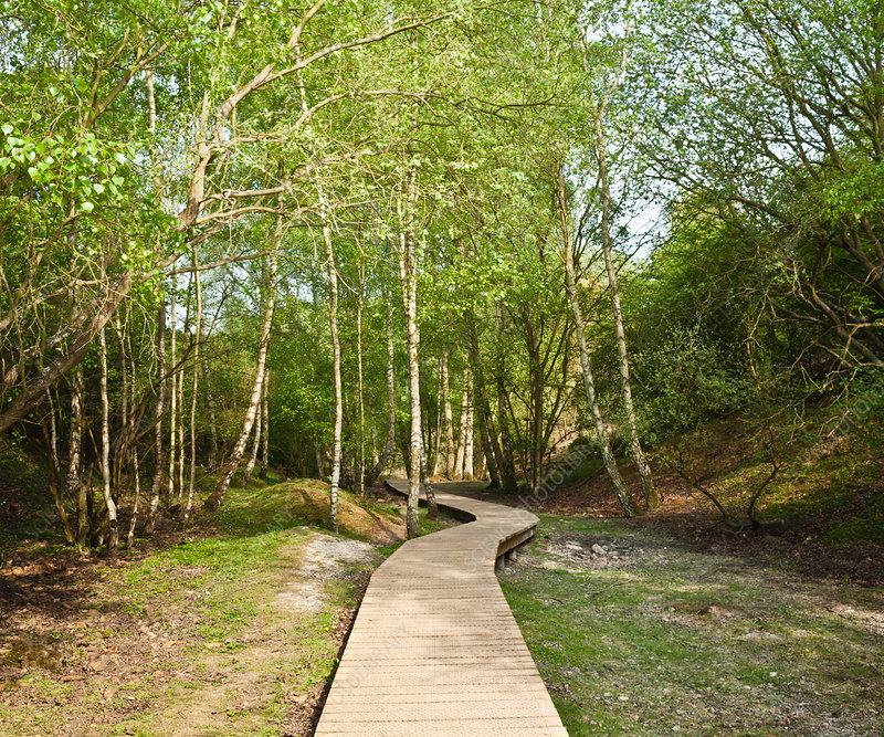 Wooden walkway in forest