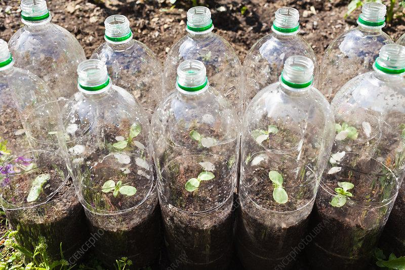 Plants growing in plastic bottles