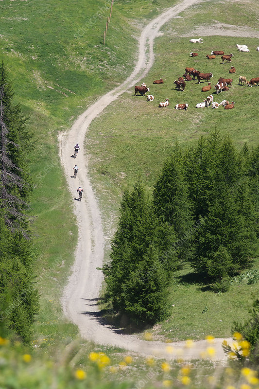 Aerial view of bikers on rural road