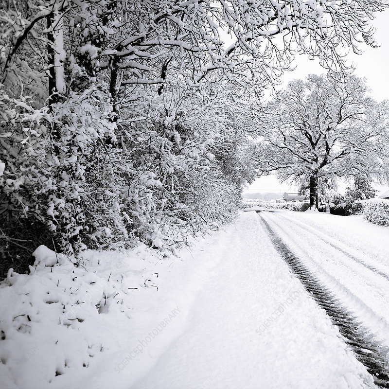 Snow covered trees lining road
