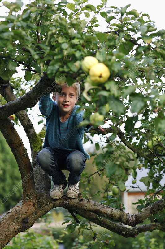 Boy climbing fruit tree