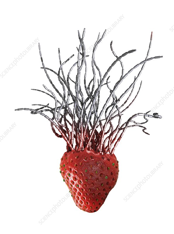 Genetically modified strawberry, artwork