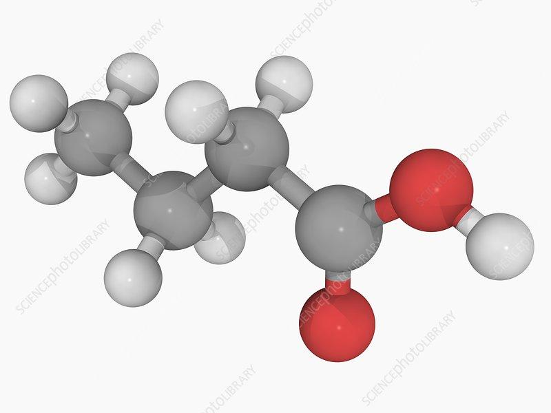 Butyric acid molecule